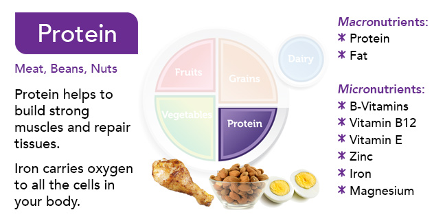 Food Group Slides - protein